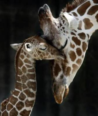 b2ap3_thumbnail_Bellissime-foto-di-mamme-animali-con-i-loro-cuccioli-10.jpg