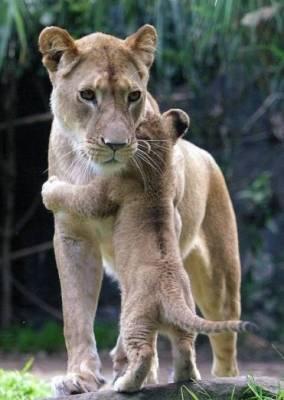 b2ap3_thumbnail_Bellissime-foto-di-mamme-animali-con-i-loro-cuccioli-11.jpg