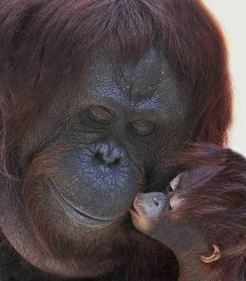 b2ap3_thumbnail_Bellissime-foto-di-mamme-animali-con-i-loro-cuccioli-13.jpg