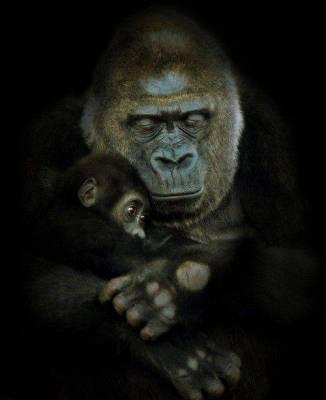 b2ap3_thumbnail_Bellissime-foto-di-mamme-animali-con-i-loro-cuccioli-15.jpg