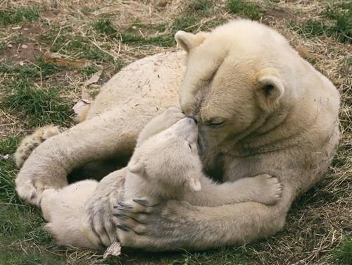 b2ap3_thumbnail_Bellissime-foto-di-mamme-animali-con-i-loro-cuccioli-17.jpg