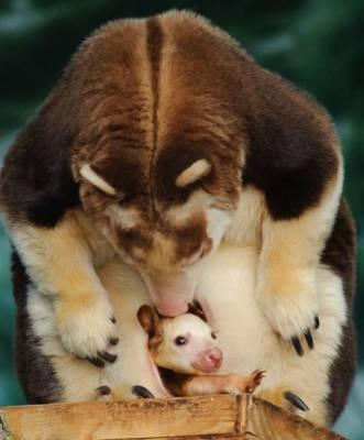 b2ap3_thumbnail_Bellissime-foto-di-mamme-animali-con-i-loro-cuccioli-18.jpg