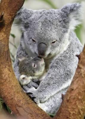 b2ap3_thumbnail_Bellissime-foto-di-mamme-animali-con-i-loro-cuccioli-21.jpg