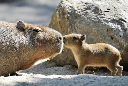 b2ap3_thumbnail_Bellissime-foto-di-mamme-animali-con-i-loro-cuccioli-24.jpg