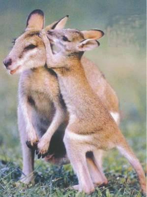b2ap3_thumbnail_Bellissime-foto-di-mamme-animali-con-i-loro-cuccioli-25.jpg