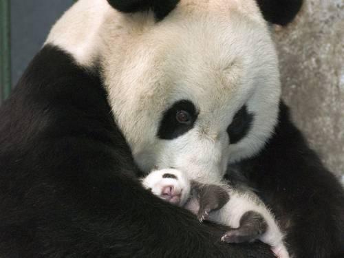 b2ap3_thumbnail_Bellissime-foto-di-mamme-animali-con-i-loro-cuccioli-27.jpg