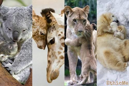 Bellissime foto di mamme animali con i loro cuccioli