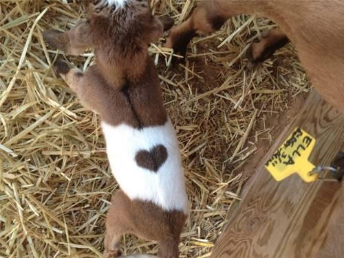 b2ap3_thumbnail_animali-cuore-peloso-10.jpg