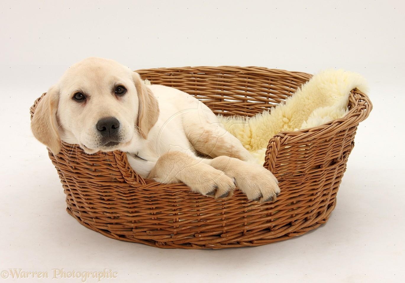 cane cestino vimini