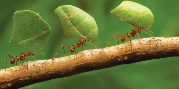 formiche clima