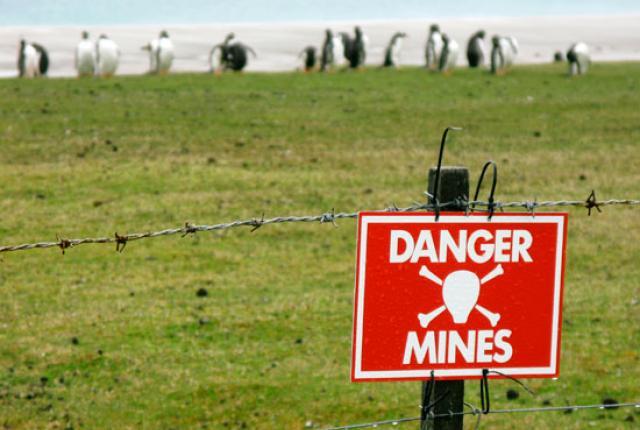 guerra pinguini