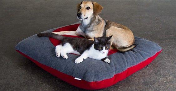 cani gatti casa