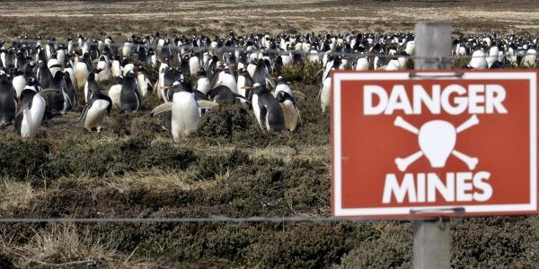 pinguini-salvati-guerra