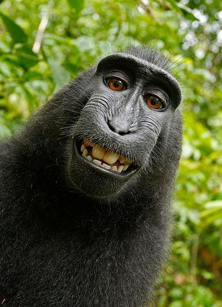 selfie macaco2