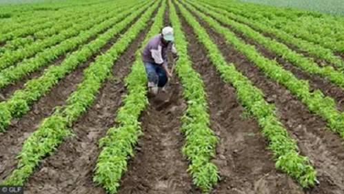 b2ap3_thumbnail_Rural-farmers.jpg