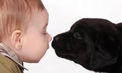 b2ap3_thumbnail_bambini-e-cani-rischio-leishmaniosi.jpg