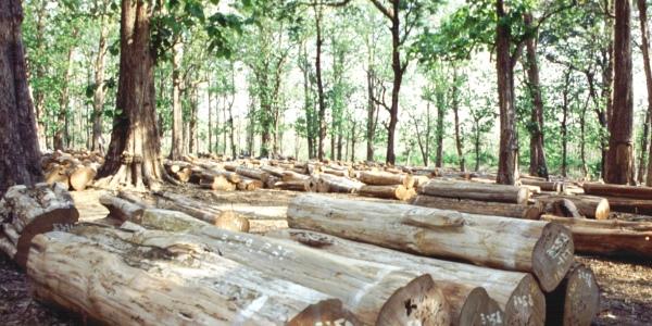 deforestazione dichiarazione ny
