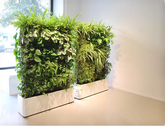 divisori 6 piante 1