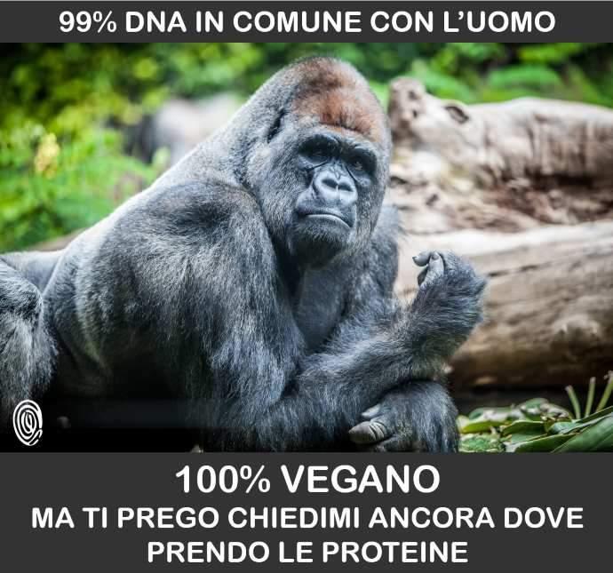 gorilla veg