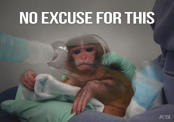 peta scimmie