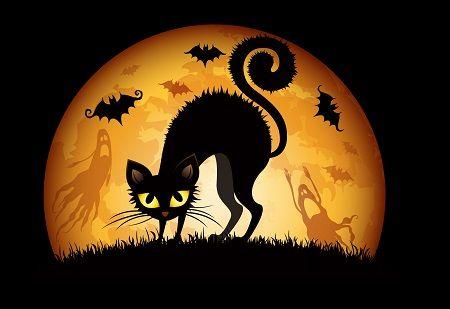 Halloween-gatti