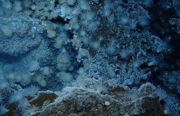 anemone-full