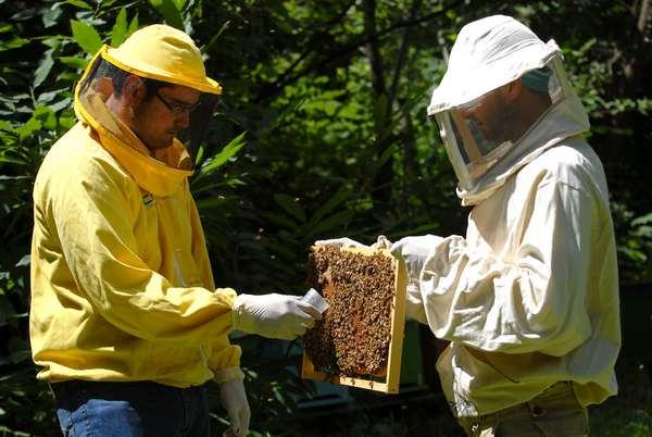 biomonitoraggio api 3