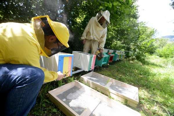 biomonitoraggio api 4