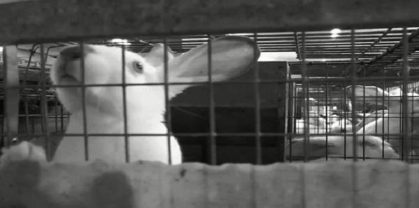 coniglio gabbia