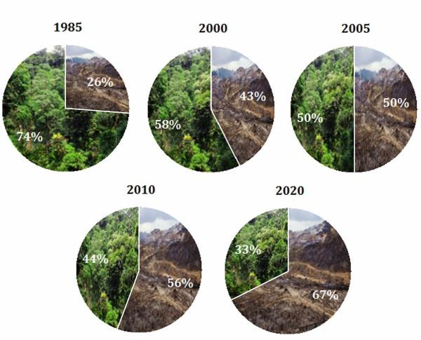 deforestazione prodotti