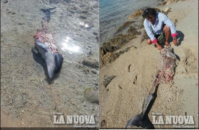 delf morto