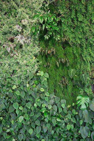 espaco espelco dagua vertical garden4