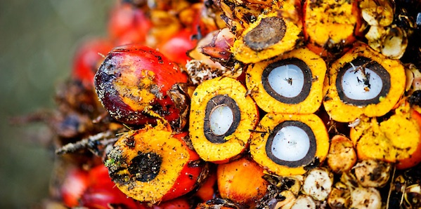 frutto palma