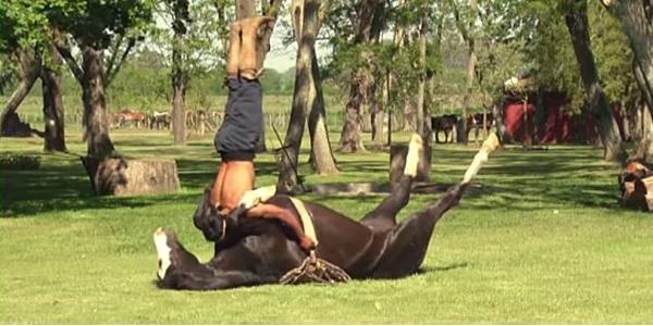 horse yoga