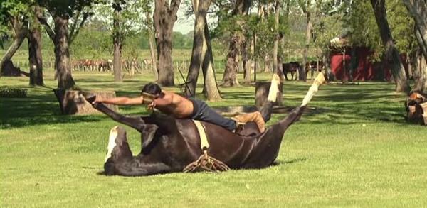 horse yoga2