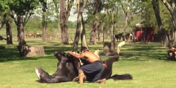 horse yoga3