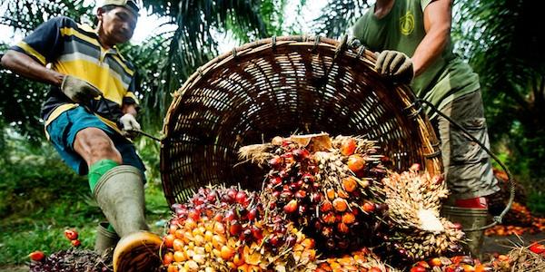 produttori palma