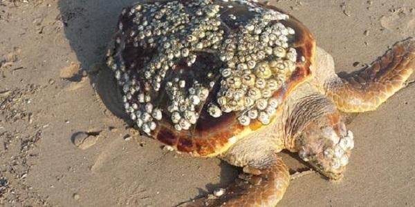 tartarughe termoli
