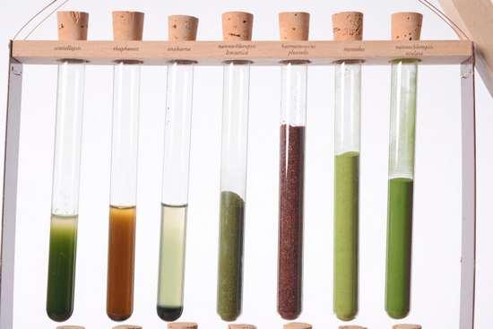 algaemy 4