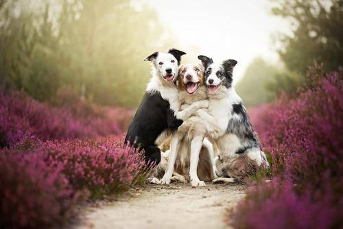 b2ap3_thumbnail_Alicja-Zmyslowka-foto-cani-animali-00.jpg