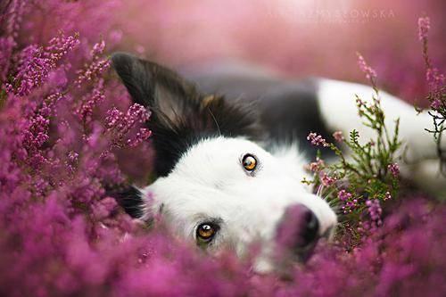 b2ap3_thumbnail_Alicja-Zmyslowka-foto-cani-animali-01.jpg