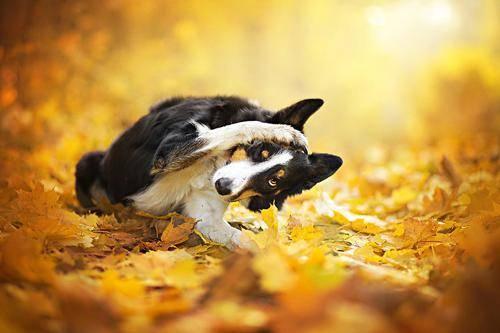 b2ap3_thumbnail_Alicja-Zmyslowka-foto-cani-animali-04.jpg