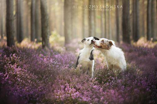 b2ap3_thumbnail_Alicja-Zmyslowka-foto-cani-animali-05.jpg