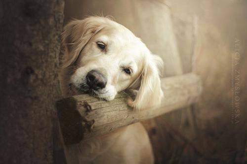b2ap3_thumbnail_Alicja-Zmyslowka-foto-cani-animali-06.jpg