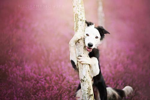 b2ap3_thumbnail_Alicja-Zmyslowka-foto-cani-animali-08.jpg
