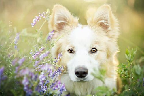 b2ap3_thumbnail_Alicja-Zmyslowka-foto-cani-animali-10.jpg