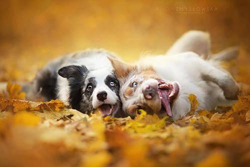 b2ap3_thumbnail_Alicja-Zmyslowka-foto-cani-animali-11.jpg