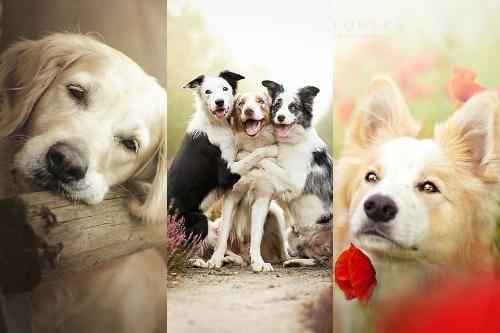 b2ap3_thumbnail_Alicja-Zmyslowka-foto-cani-animali-12.jpg