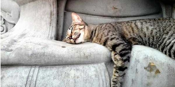 buddha gatti
