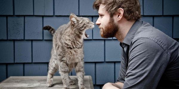 gatti uomini